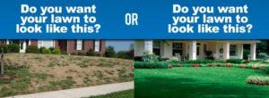 Lawn Compare