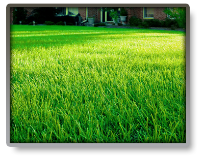 Weed Control In Lawns Green Unlimited Ottawa Lawn Care